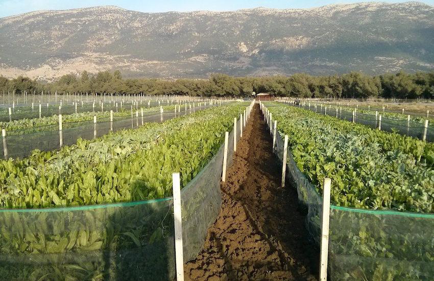 Snail Farm Lebanon