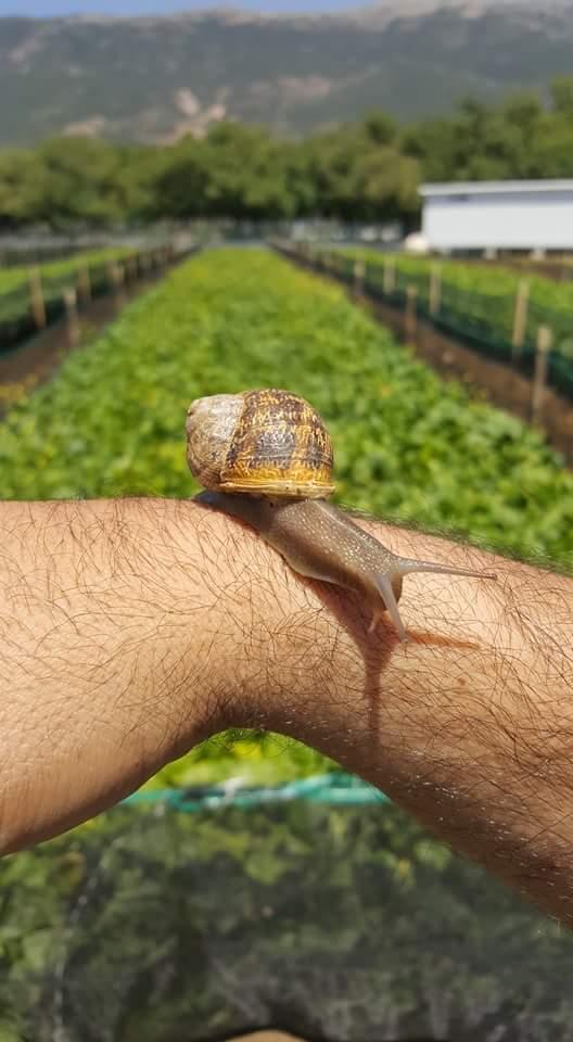 Helix Farm Lebanon