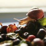 snail farming US