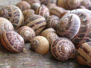 how to set up a snail farm
